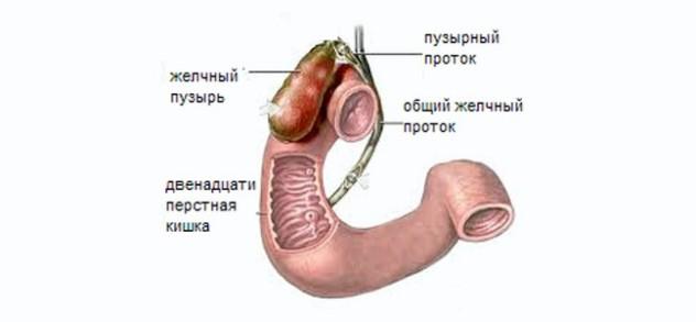 Как выводить желчь из организма?