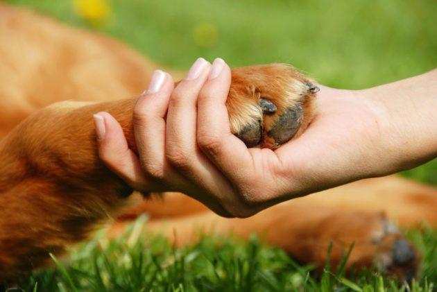 Глисты от собак к человеку передаются орально-фекальным путем