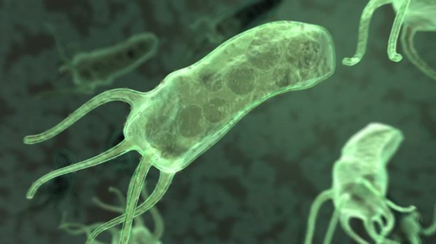 Хеликобактерии вызывают развитие болезней, при которых болит желудок, в том числе по ночам