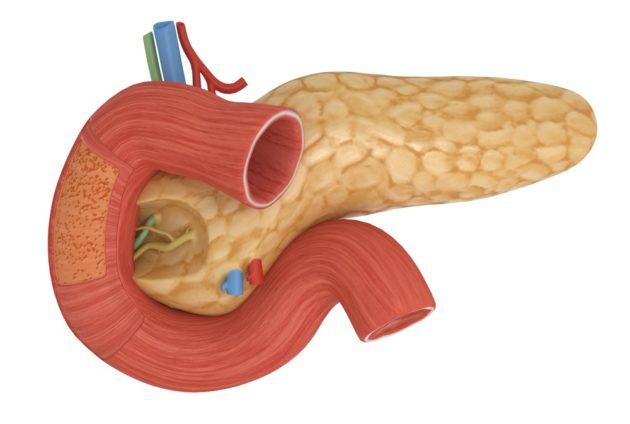 Панкреатическая эластаза